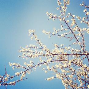 Monatsrückblick März